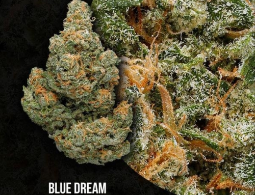 Blue Dream Strain Review:  Is It Everything You Need?